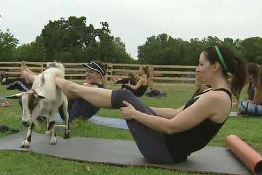 8. Yogo Goat