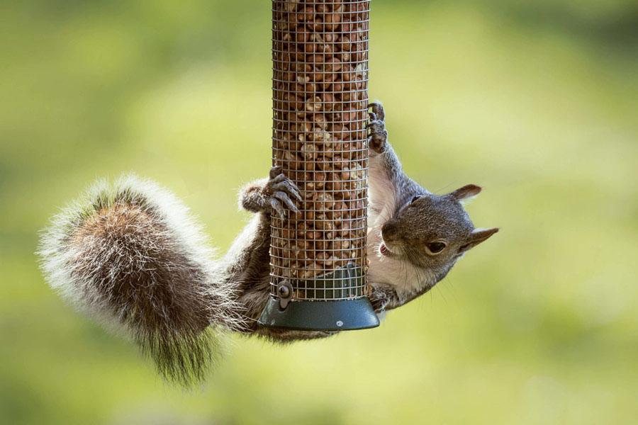 8. Keep pests away from Bird Feeders